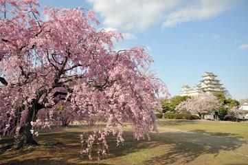 姫路城と枝垂れ桜1-1