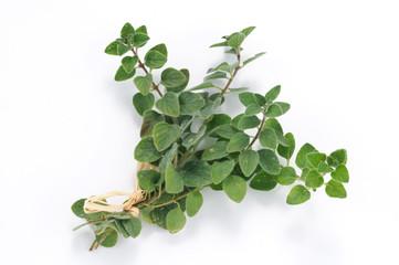 Timo - erba aromatica
