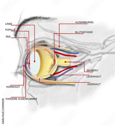 anatomie bruch mittelfinger\