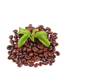 green plant in a pile of coffee beans