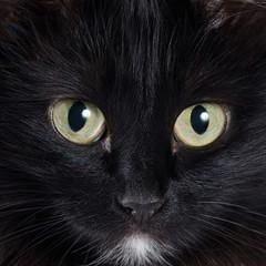 Portrait of a black kitten