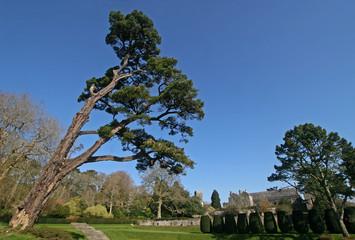 Dartington Hall, Devon