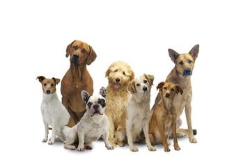 Hunde Mix