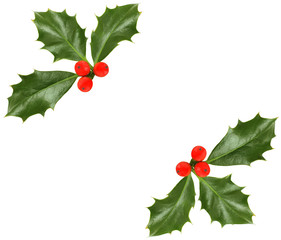 Christmas holly isolated - design element