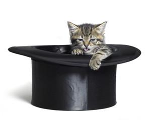 funny kitten in top hat