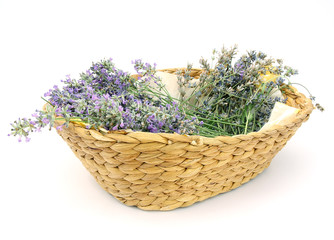 Bunches of fresh lavender in a basket