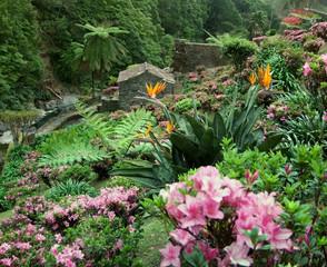 flourish vegetation at the Azores