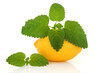 Lemon Fruit and Lemon Balm Herb