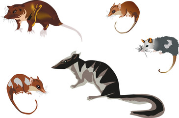 five rodents isolated on white