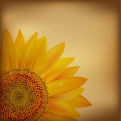 Vintage Paper With Sunflower