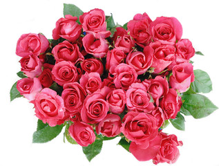 Red roses isolated on the white background