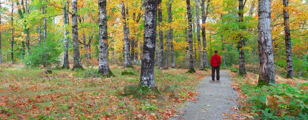 Walker and oak forest in Alsasua, Navarra