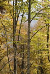 bosco del cansiglio 70