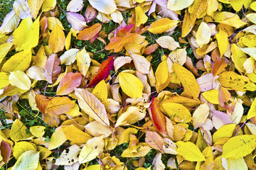 foliage in indian summer colors