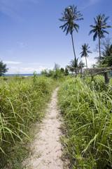 sentiero tra le palme su un'isola in cambogia