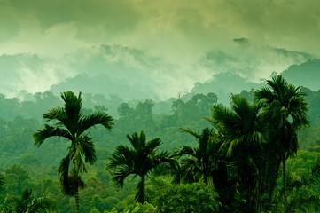 Foto op Plexiglas Indonesië Selva de Sumatra