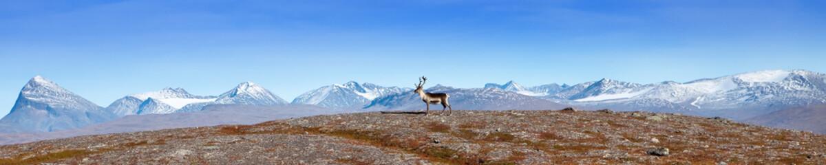 Lappland Bergpanorama mit Rentier