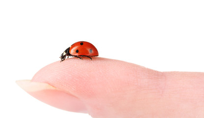 ladybird on finger isolated on white