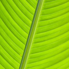 Background of leaves.