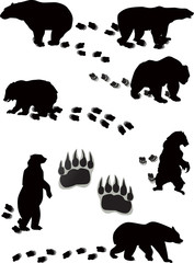 seven bears and tracks isolated on white
