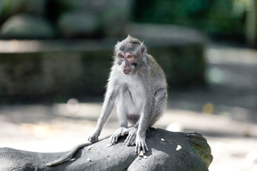 Sweet Little Monkeys - The Everyday Life