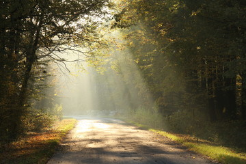 Lane running through the autumn deciduous forest at dawn