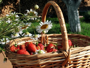 Wild strawberry in a wum basket and white camomiles