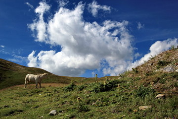 White cow in the mountain