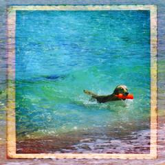 Cane che gioca nel mare, texture retro