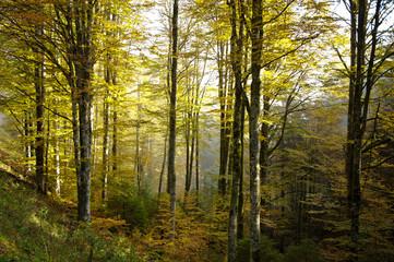 bosco del cansiglio 421