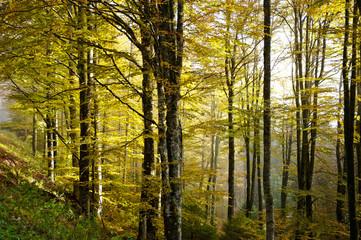 bosco del cansiglio 422