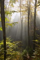 bosco del cansiglio 424