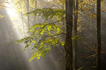 bosco del cansiglio 425