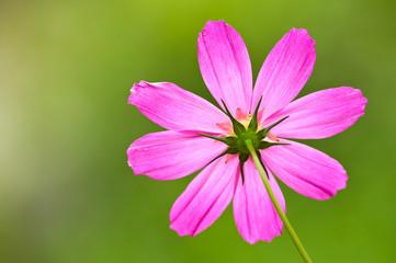 fiori 1374