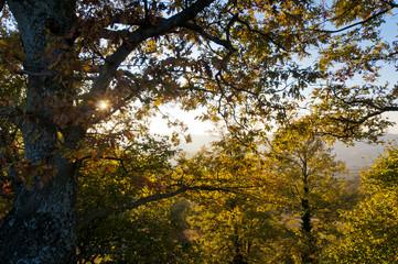 alberi, foglie e controluce