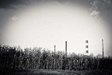 Kominy dominujące nad łąkami. - fototapety na wymiar