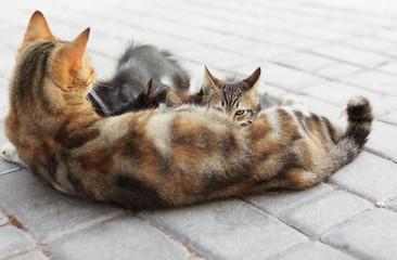 Feeding Cat