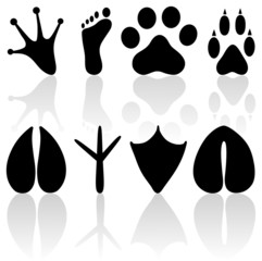 Vector human and animal footprints on a white background