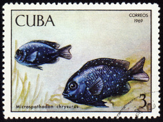 Fish Microspathodon chrysurus on post stamp