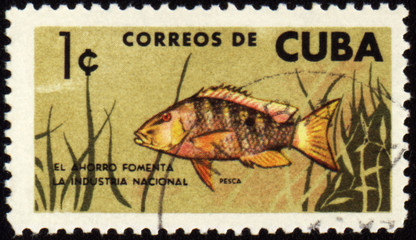 Fish on post stamp