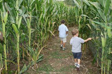 Kids in the Corn Maze