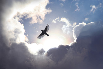 Angel Bird in Heaven