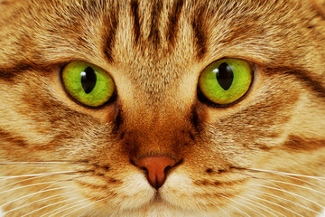 Close-up portrait of green-eyed cat
