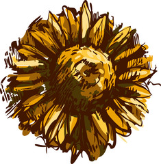 a sketch blossoming bud plant sunflower field