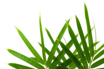 feuilles bambou