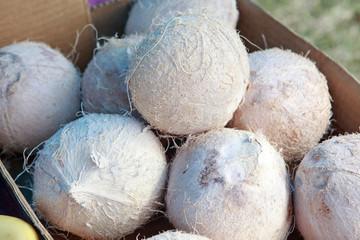 white coconuts