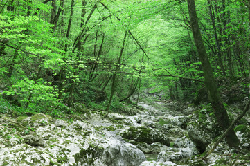 Stream in beautiful green forest