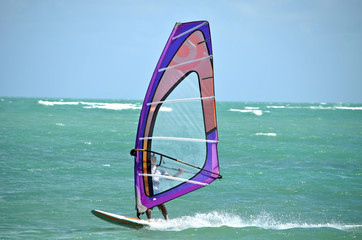 Purple Windsurf Sail
