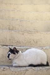 Piękny kot w Grecji, na Rodos