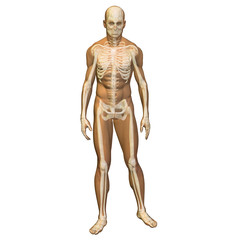 High resolution conceptual 3D human ideal for anatomy